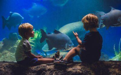 SEE YOUR FAVORITE ANIMALS AT THE FLORIDA AQUARIUM